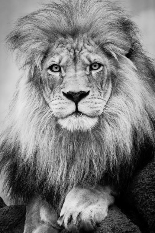 IMAGE: http://www.akh-photography.com/Nature/Wildlife/i-FS4dJNx/0/XL/20130608-DSC_3721-XL.jpg