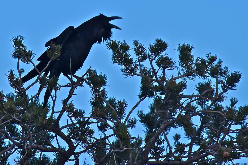 Raven, Utah