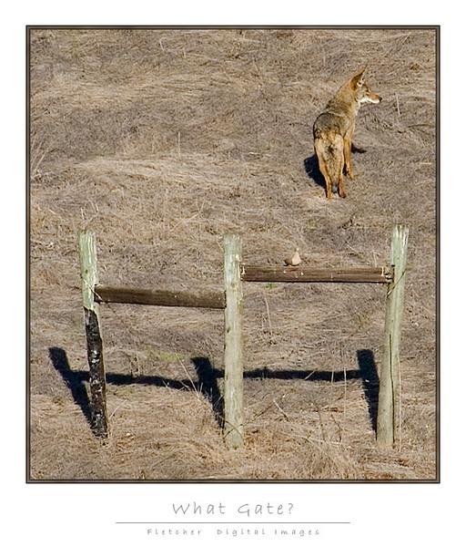 Coyote_Gate_9207-2