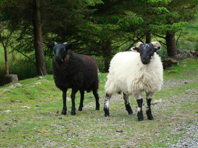 Twins, Ashmount Leenane, County Galway Ireland