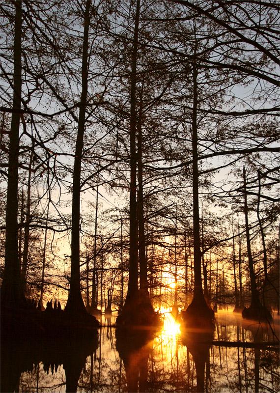 Cypress Brake @ sunrise. Loakfoma Lake