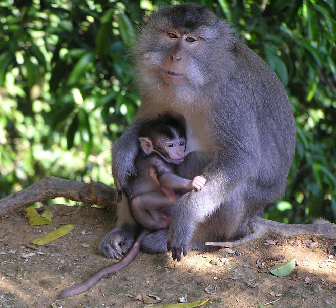 monkeys bali aug 2010