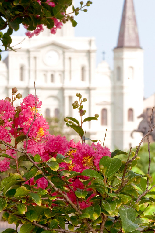 St. Louis Cathedral, Jackson Square  New Orleans, Louisiana