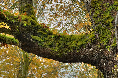 Moss and fern covered branch.