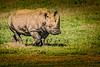 Rhino 3281