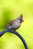 IMG_0097small birds