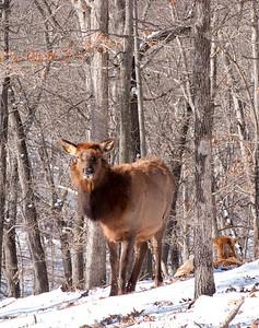 Lone Elk Park, 1/10/2010