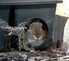 Traps Rats, Not Rabbits