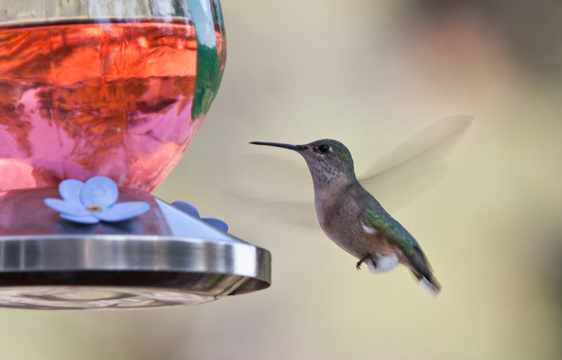 Hummers in montana 2009