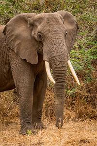 Elephant 2242
