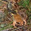 Wood Frog and the Garter Snake