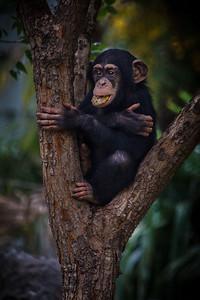 I am a happy monkey