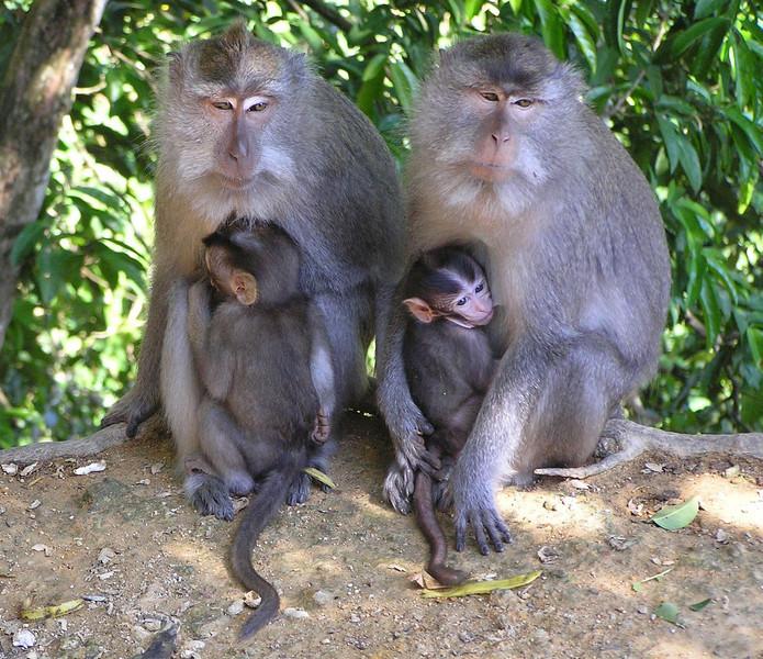 more monkeys bali aug 2010