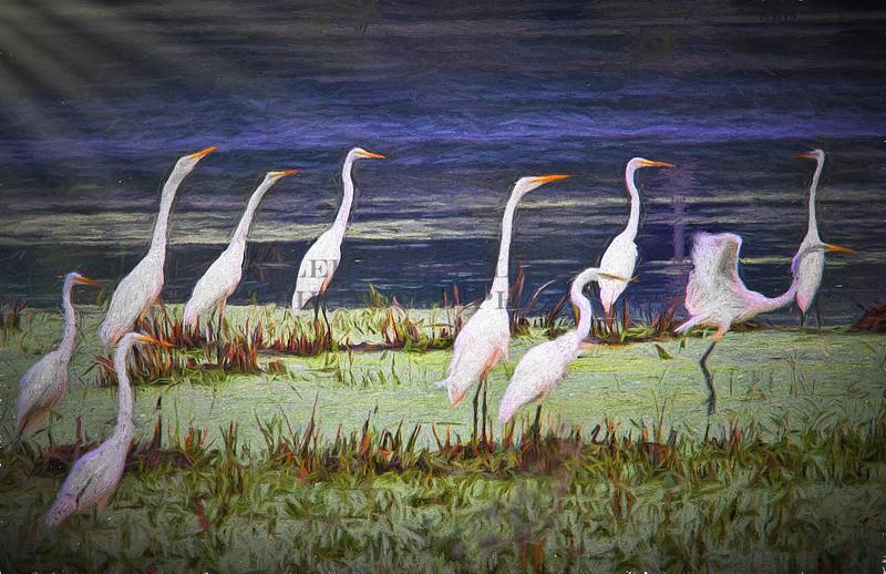 Marsh Gathering
