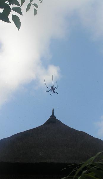 spider 2 bali aug 2010