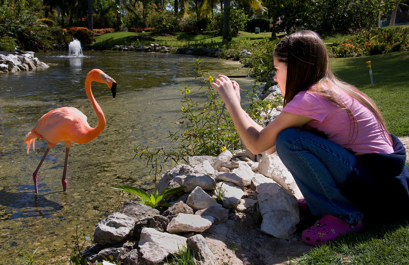 Francesca photographing a flamingo at Melia Caribe Tropical, Punta Cana, Dominican Republic