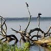 Cormorant, Anhinga, and Heron at Newnan's Lake