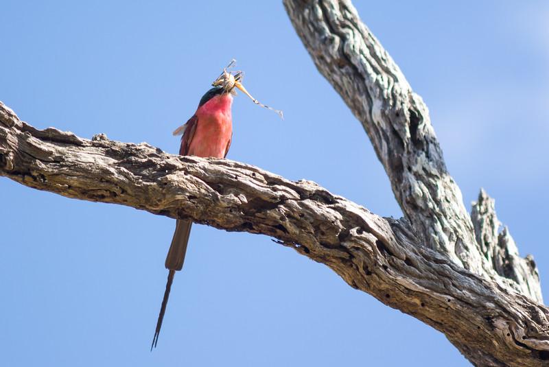 Kruger Park,South Africa.