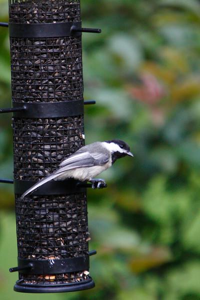 IMG_0023small bird