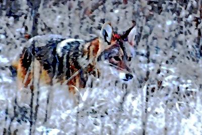 Tennessee Wildlife