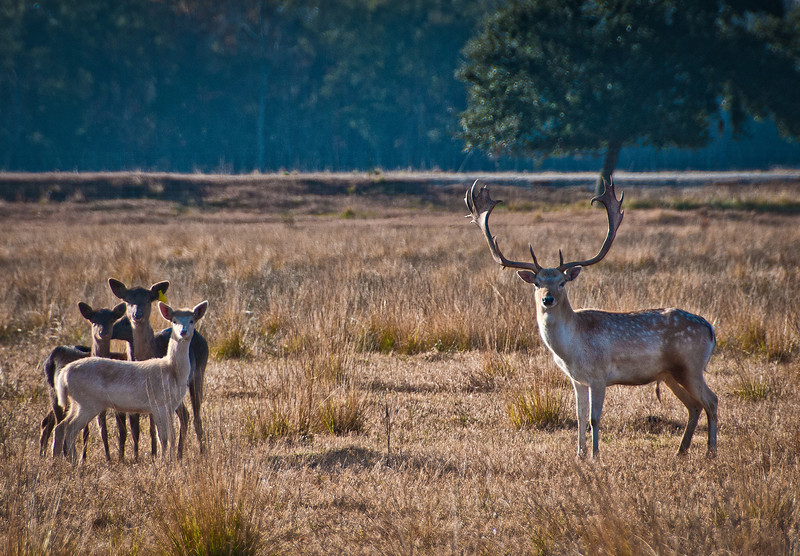 Wildlife on the beautiful Rhodes Ranch in Southwest Louisiana.