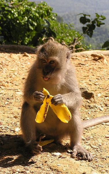 monkey bali aug 2010