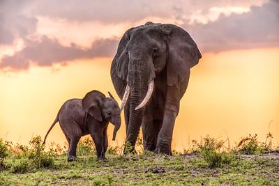 Elephants 1584