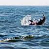 DSC02118 Dolphin Flip at Chincoteague