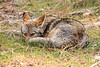 Coyote Aware