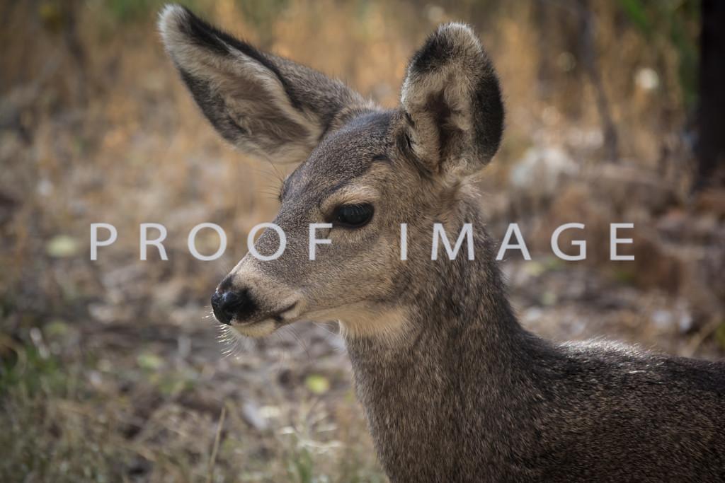 Baby Deer Close Up