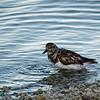 Dunedin Causeway Bird