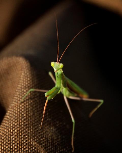 Hello strange creature...