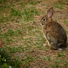 Rabbit in my garden