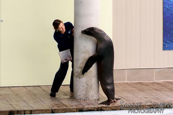 Sea lion training session at the New England Aquarium.