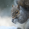 Squirrel in the snow.
