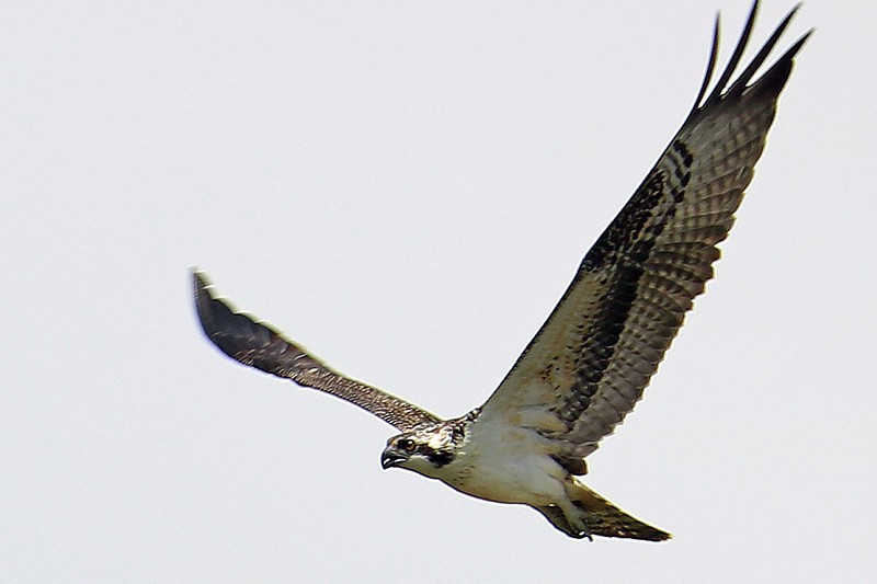 Focus in Flight