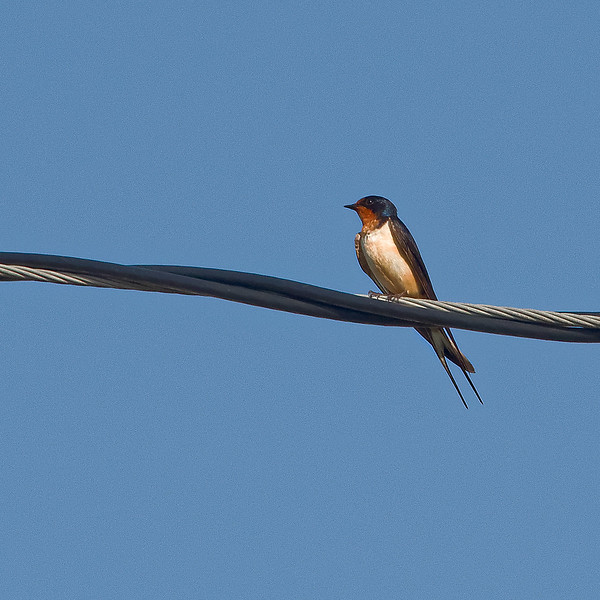 Unknown Bird in Etowah