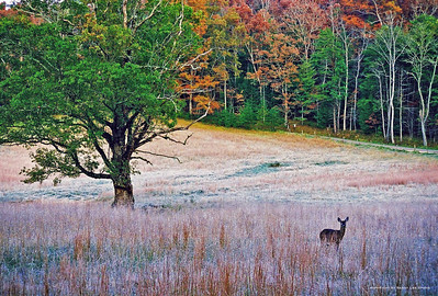 Taken in Great Smoky Mountains National Park, Cades Cove area.