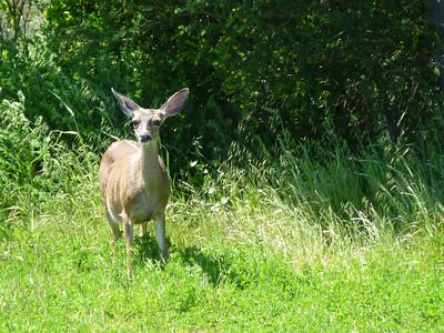 Deer Woodland Ave.