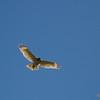 Hawk migration.