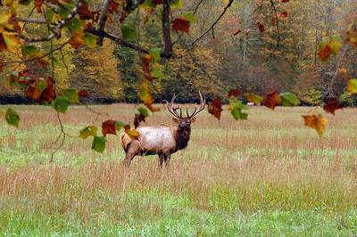 Taken in Great Smoky Mountains National Park, Cataloochee Valley.