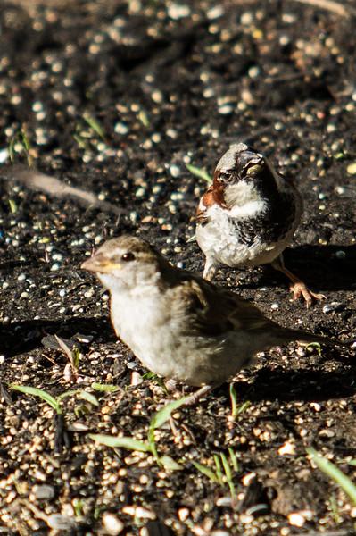 Birding_Rochester_061312_005