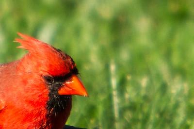 Birding_Rochester_061312_035