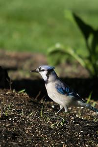 Birding_Rochester_061312_019
