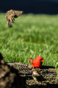 Birding_Rochester_061312_037