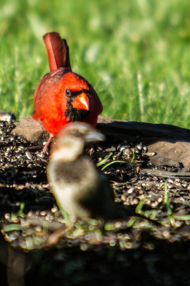 Birding_Rochester_061312_034