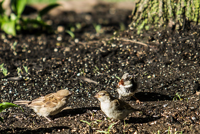 Birding_Rochester_061312_004