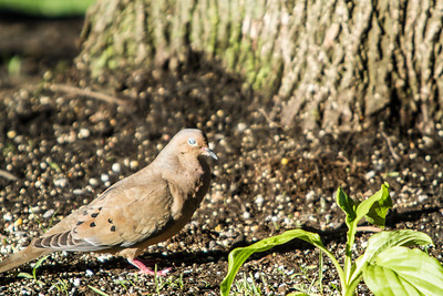 Birding_Rochester_061312_113