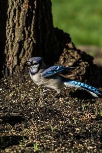 Birding_Rochester_061312_020