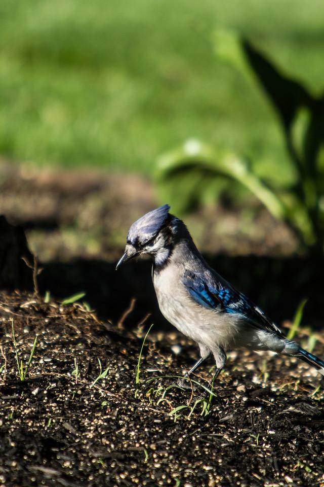 Birding_Rochester_061312_018